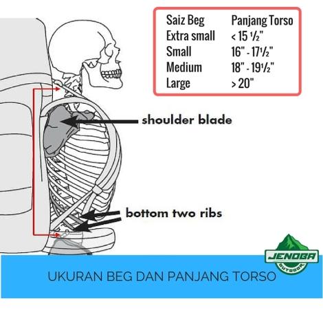 torso length